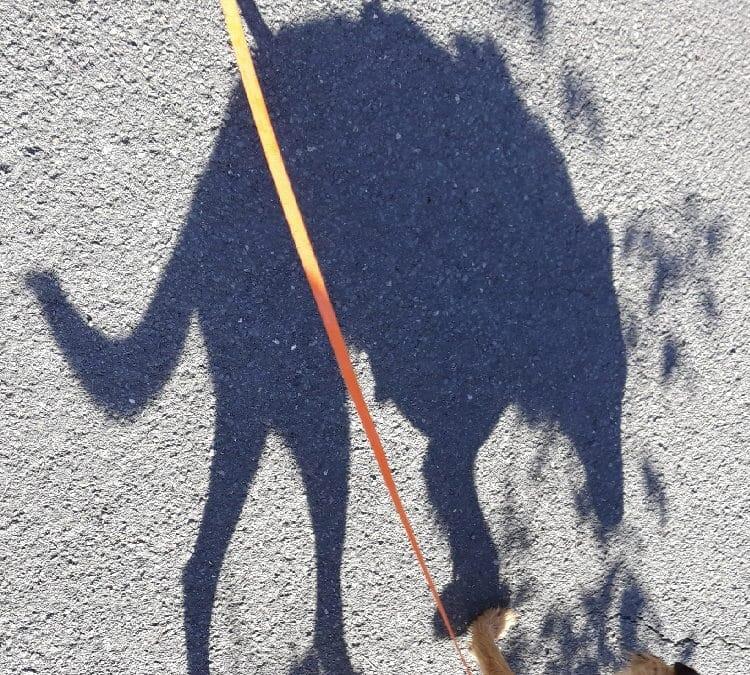 Der Schatten macht den Hund zum Ungeheuer - Bünau-Biografien
